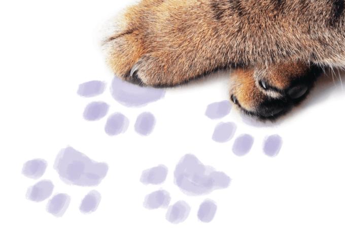 Os animais e o coronavírus