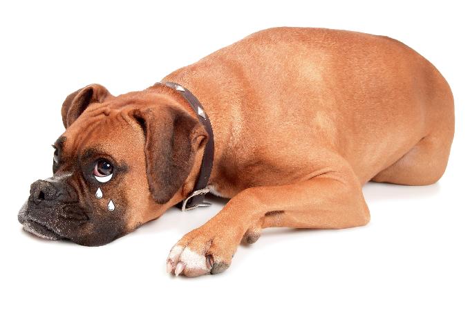 Cachorros podem sofrer após a flexibilização da quarentena