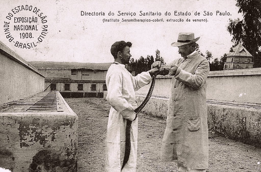 Vital Brazil extraindo veneno de cobra no Instituto Serunterápico do Estado de São Paulo (atual Instituto Butantan)
