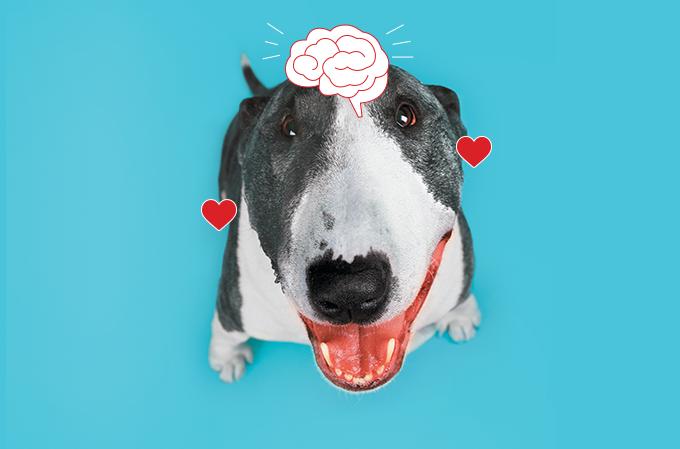 cérebro cão