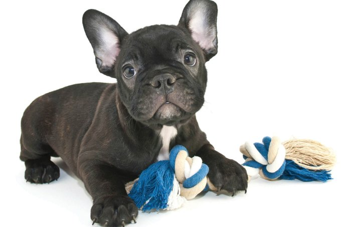 Cachorro pode pegar Covid-19?