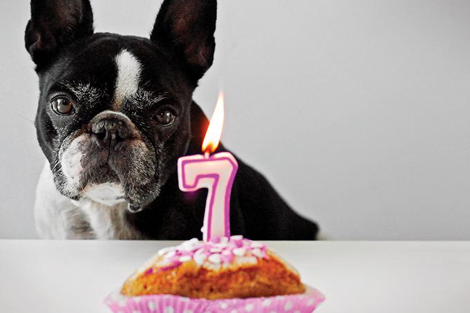 Como comparar a idade dos cães com a nossa