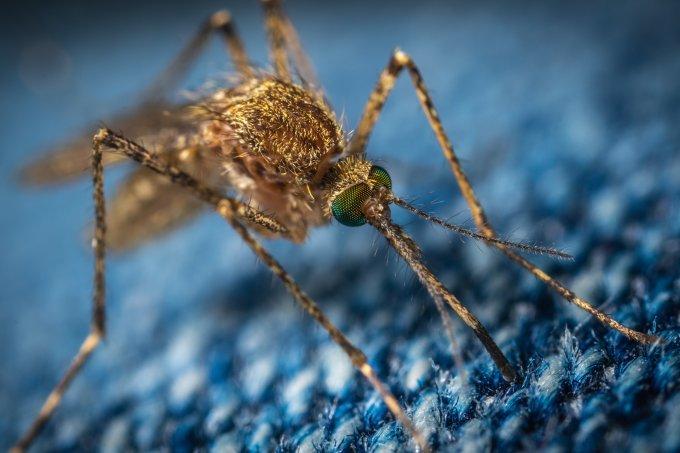 Como evitar a dengue durante a pandemia de Covid-19