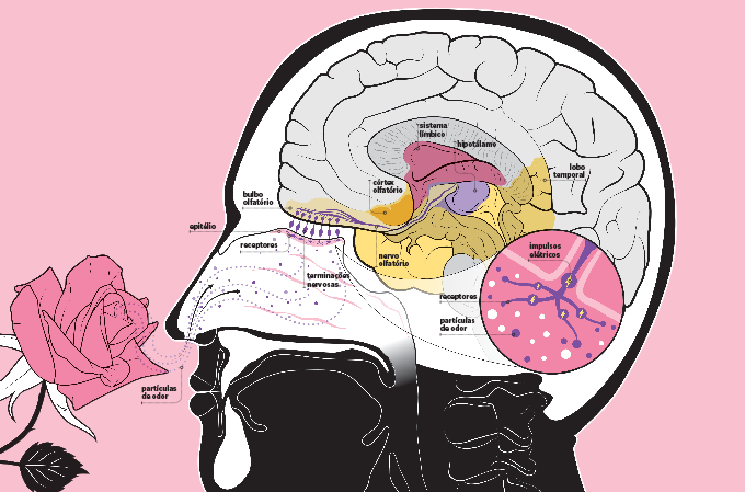 Sistema olfatório