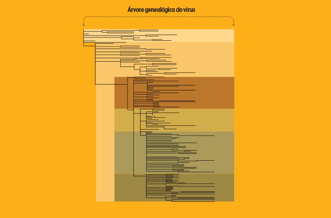 representação de análise filogenética do coronavírus