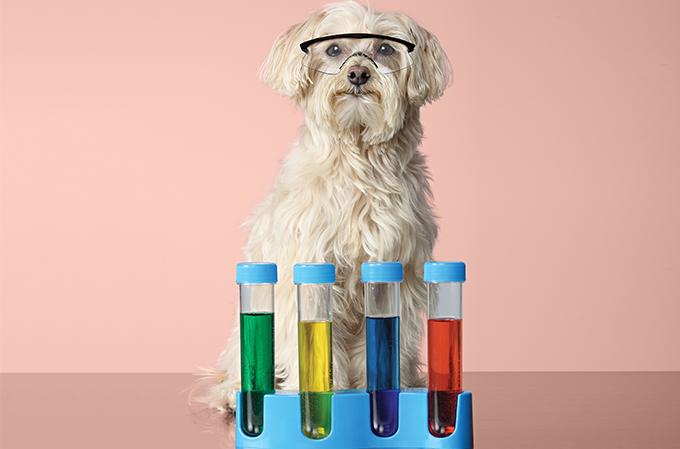 Terapia com células-tronco para os pets